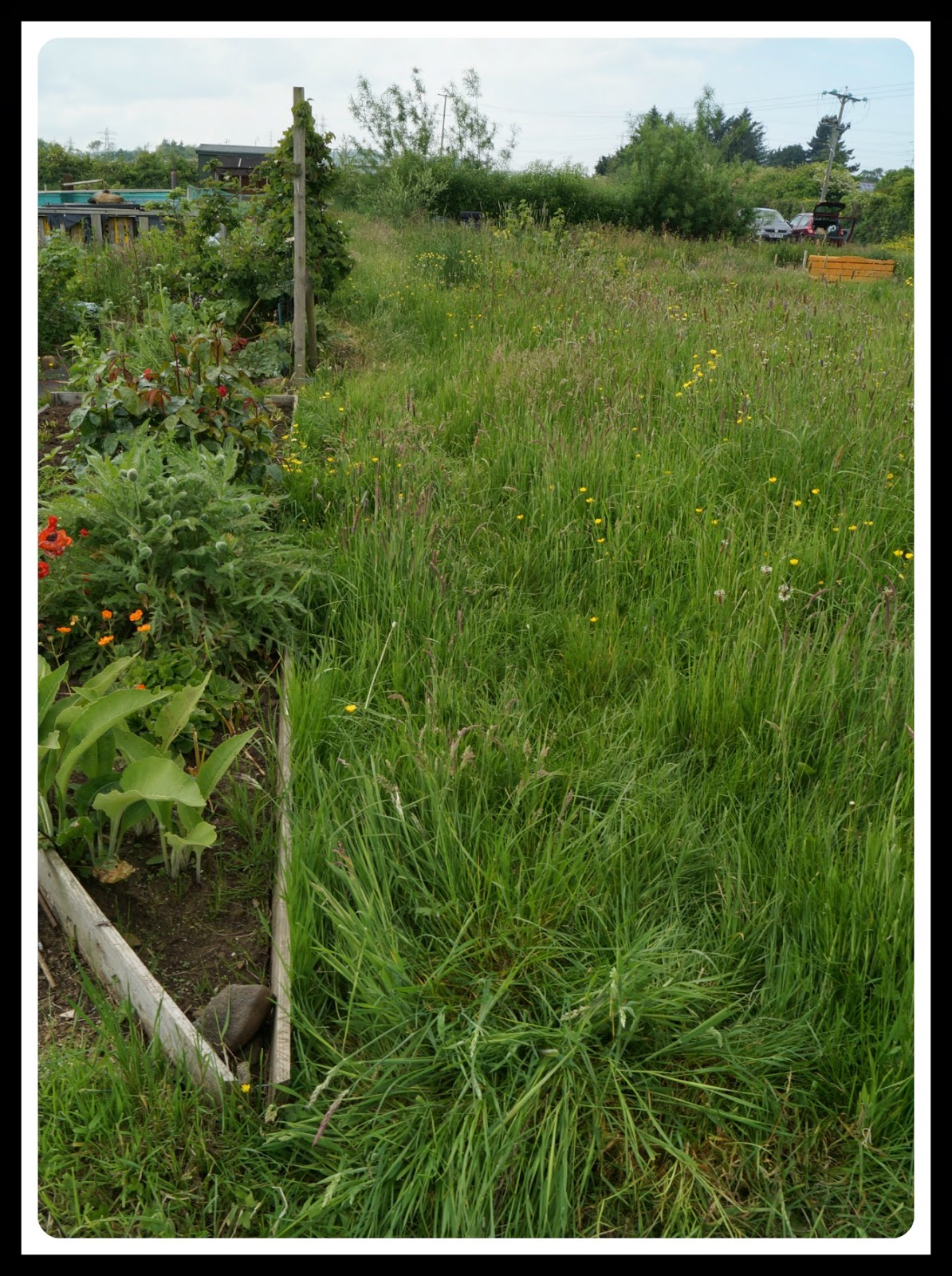The 14b path arrgghhh - 'growourown.blogspot.com' ~ an allotment blog