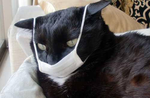 10 Tips Cepat Menyembuhkan Kucing Flu Bagi Bagi Gus