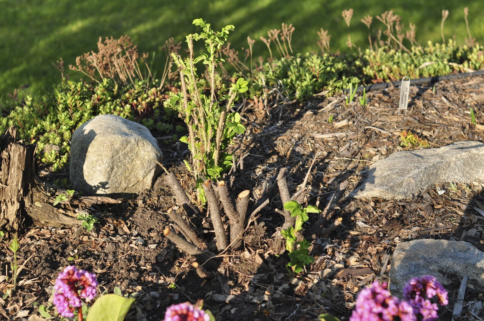 Northern Exposure Gardening: Lots of Northern Blooms