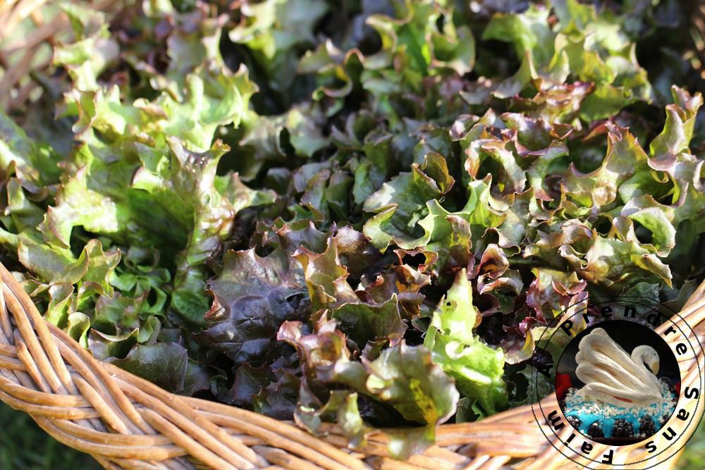 Tout savoir sur les salades (pas à pas en photos)