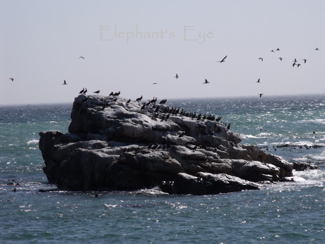 Cormorants on a rock at Lambert's Bay