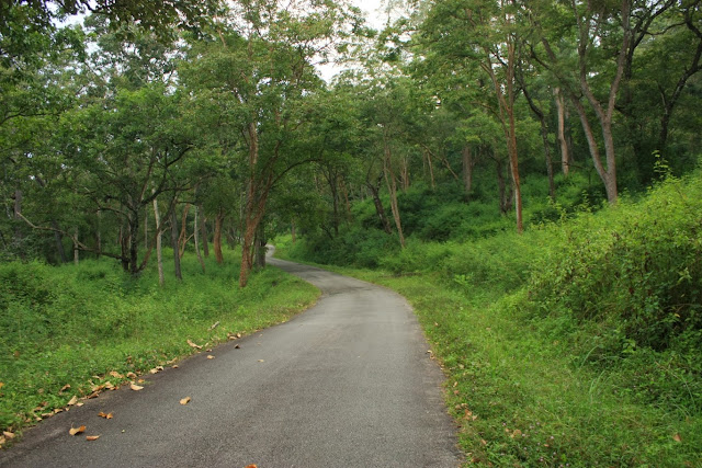 The isolated road from K Gudi to BR temple inside BRT tiger reserve