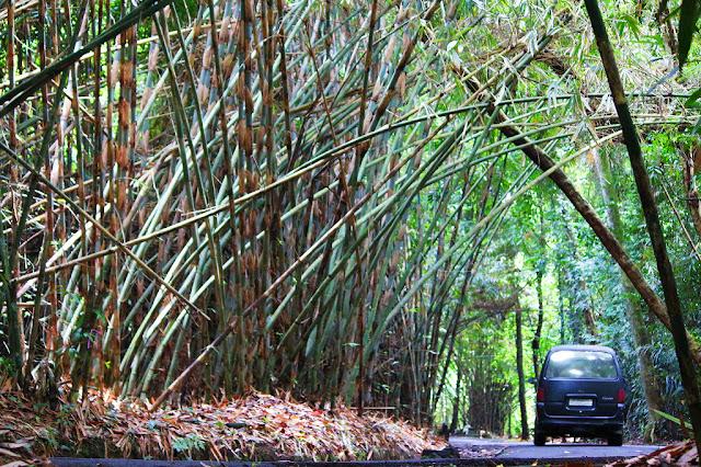 hutan bambu bali