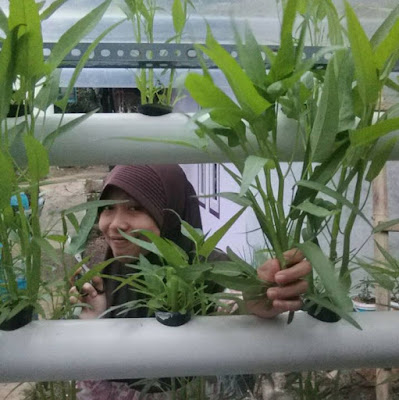 micro farming urban farming