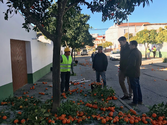 http://www.esvalverde.com/2019/01/recogida-de-naranjas-19.html
