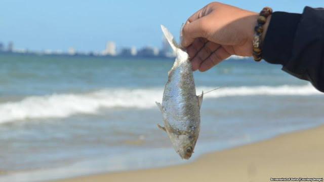2 tấn cá chết dạt biển Đà Nẵng, chính quyền nói nước đạt chuẩn
