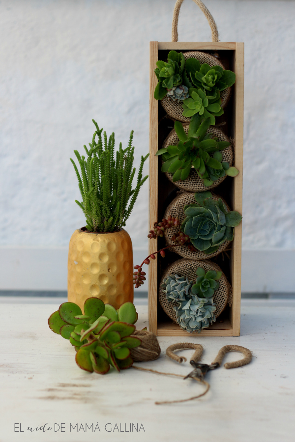 succulents vertical garden