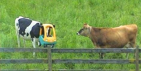 Vaca presa carrinho