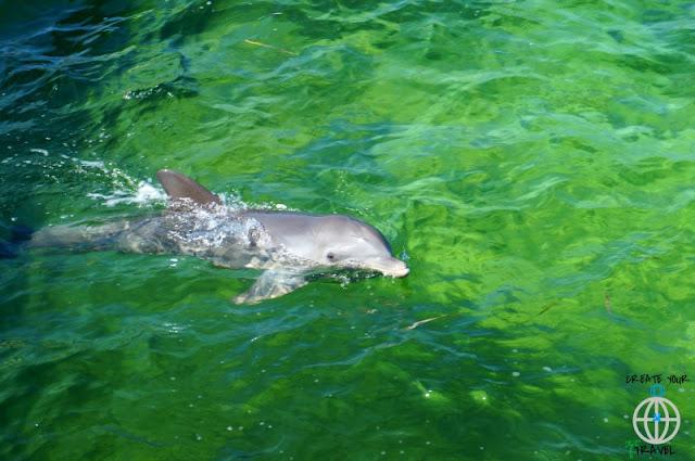 delfiny kuba