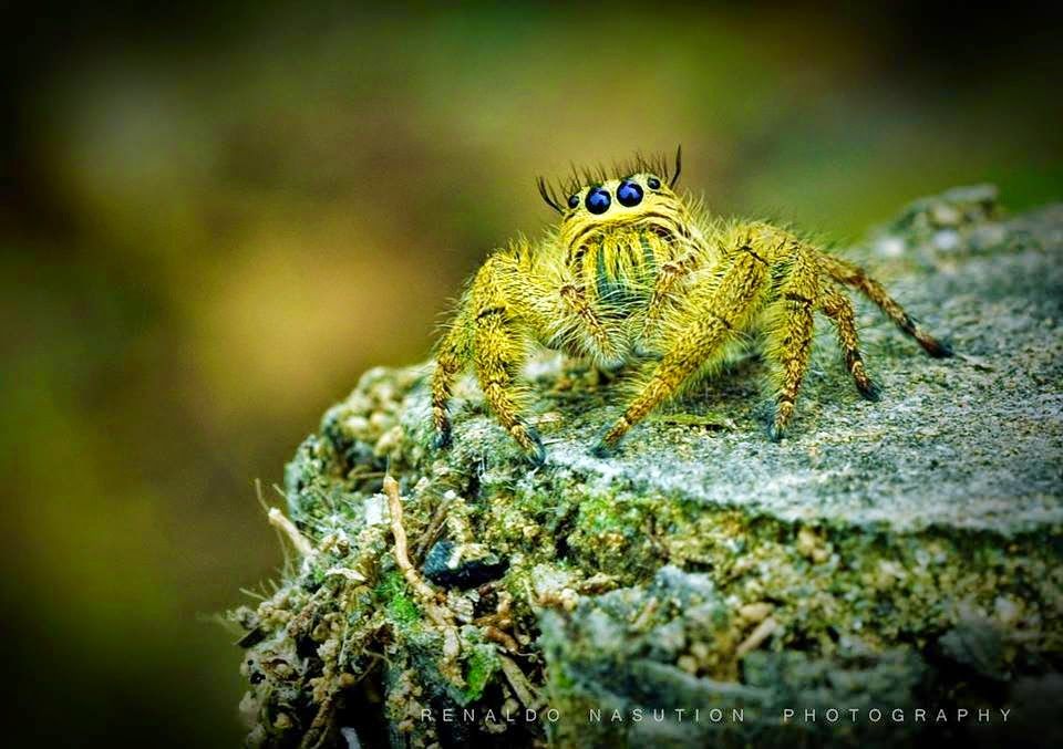Mr Spider By Antoncabon