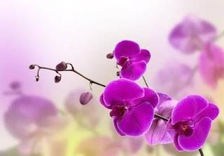 Pátio Alcântara recebe 'Mostra de Orquídeas'