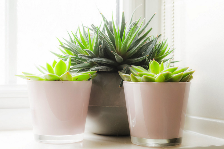Six Stylish Plants That Can Live Happily In Your Bathroom Living