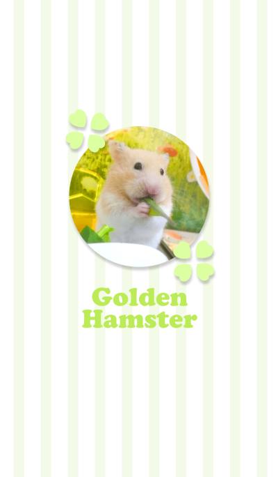 Golden Hamster1