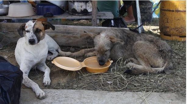 Animales con parásitos pueden transmitir enfermedades en la zona del desastre