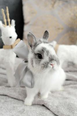 Pretty Rabbits
