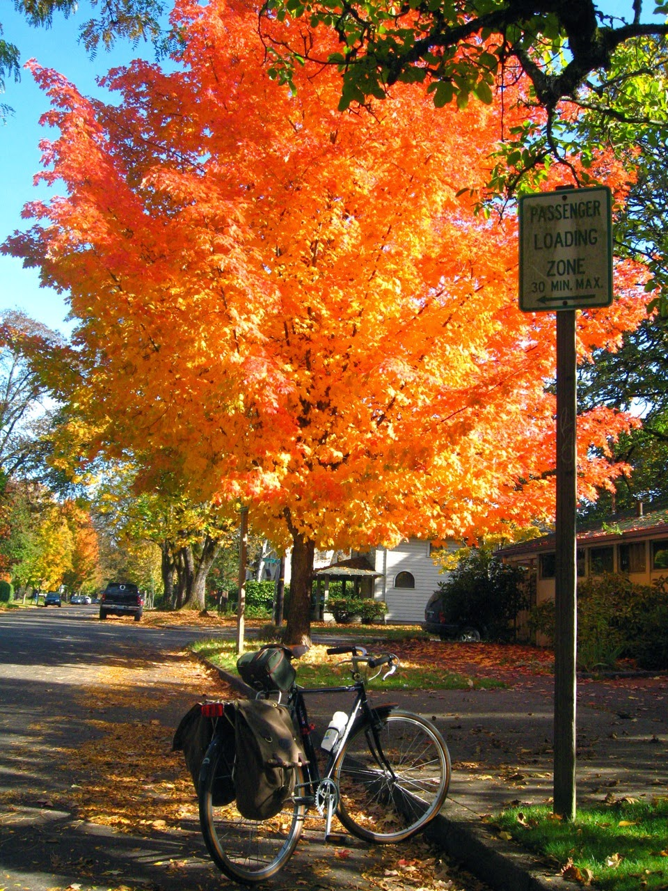 fall color, Eugene Oregon, B-Stone CB-Zero, bike, leaves, autumn, ride, red