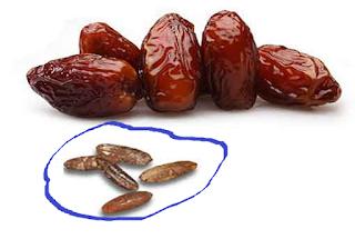 Manfaat dan khasiat biji kurma