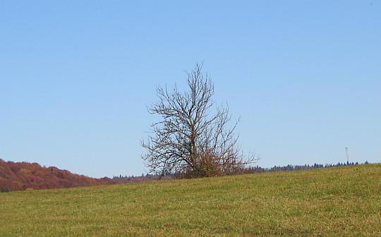 Zdynia. Rozległe pastwiska na stokach Rotundy.