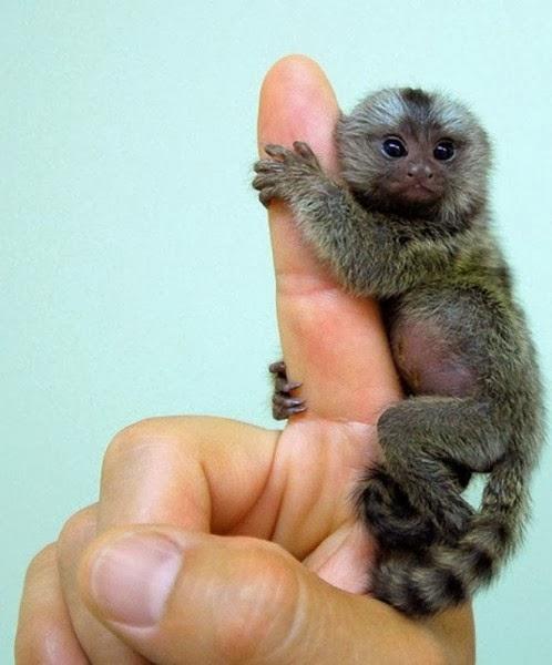 Lucu Monyet