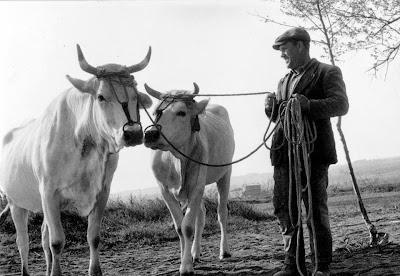 Risultati immagini per agricoltura contadina