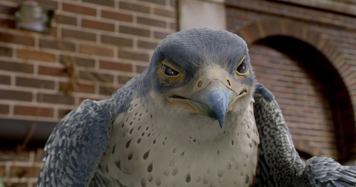 Unique Facts And Information The Fastest Animal In The World Peregrine Falcon
