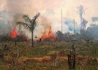 Brenning av regnskog i Brasil. Foto Nasa, fri bruk