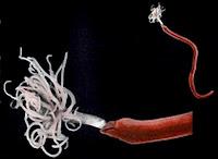kingdom animalia phylum porifera sponges, kingdom animalia subkingdom parazoa phylum porifera, kingdom animalia phylum quiz, kingdom animalia phylum chordata rap, kingdom animalia phylum chordata song, kingdom animalia phylum cnidaria class scyphozoa, subphylum of the kingdom animalia, phylum of the kingdom animalia, kingdom animalia phylum test