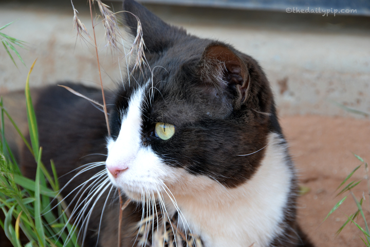 adopting a paralyzed cat with special needs