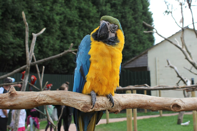 Tropical Birdland Leicestershire Review