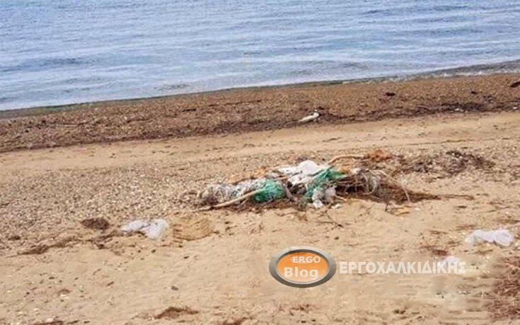 Απαράδεκτη κατάσταση σε παραλία του Δήμου Αριστοτέλη.