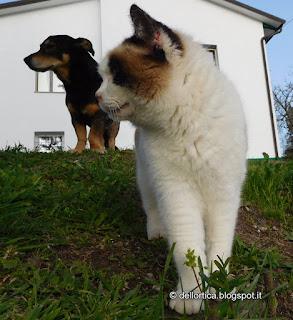 cane e gatto della fattoria didattica a Savigno Valsamoggia Bologna