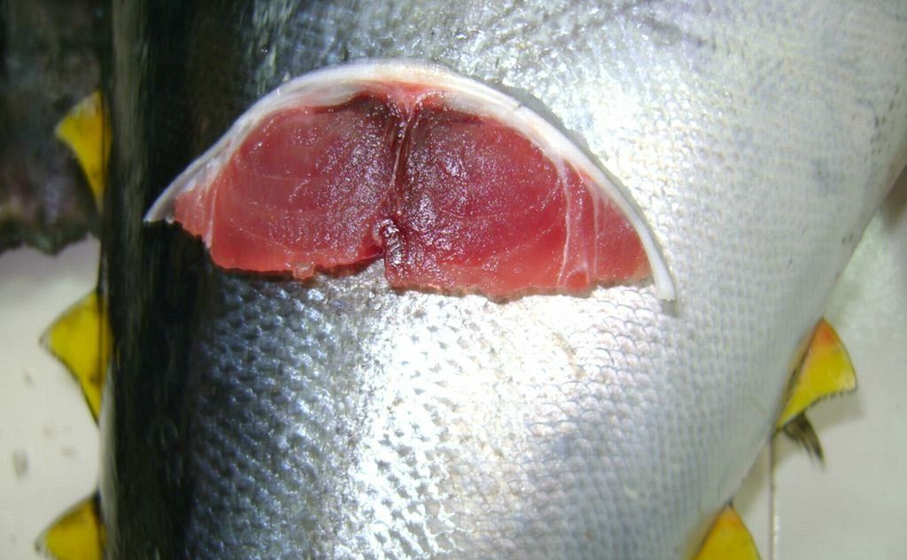 fresh tuna supplier supplier tuna indonesia tuna factory