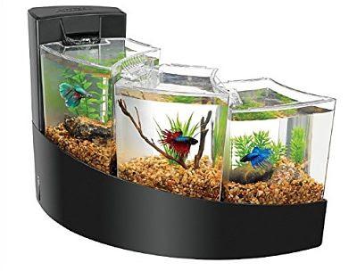Aquarium Untuk Ikan Cupang