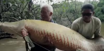 Hewan Paling menyeramkan Dan Terbesar Di Sungai Nil Mesir