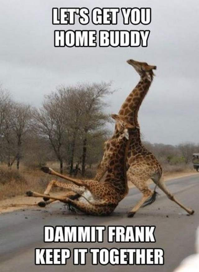 30 Funny animal captions - part 53, animal pictures with sayings, funny caption pictures