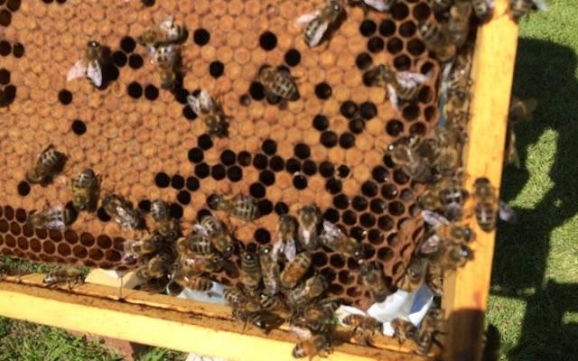 """Σεμινάριο Μελισσοκομίας από το Μελισσοκομικό Σύλλογο Ρόδου """"Η Κυψέλη"""""""
