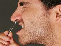 Bahaya !!! Mencabut bulu Hidung Nyatanya Menyebabkan Kematian