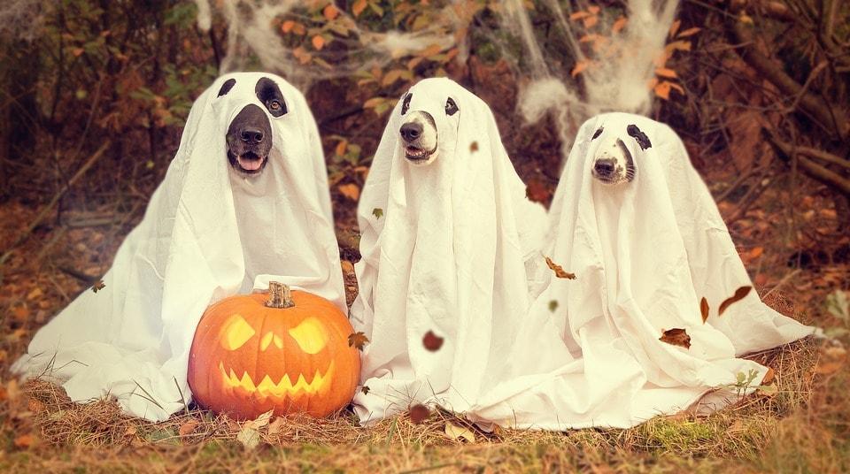 Dogs dressed