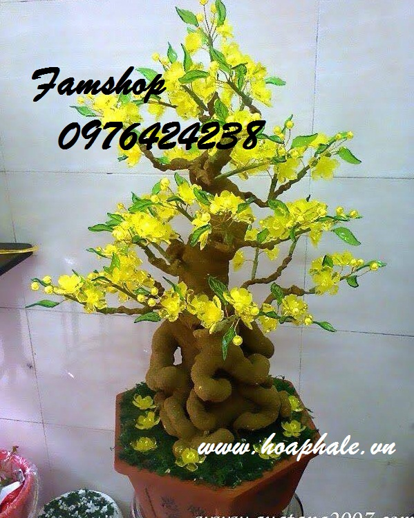 Goc bonsai mai dao o Pham Dinh Ho