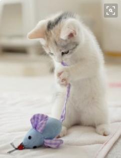 Gambar Kucing Lucu Imut Unik Persia Anggora