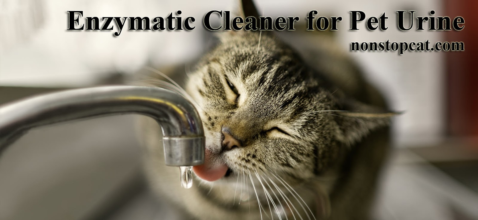 Enzymatic Cleaner for Pet Urine
