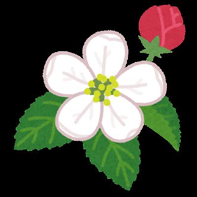 りんごの花のイラスト