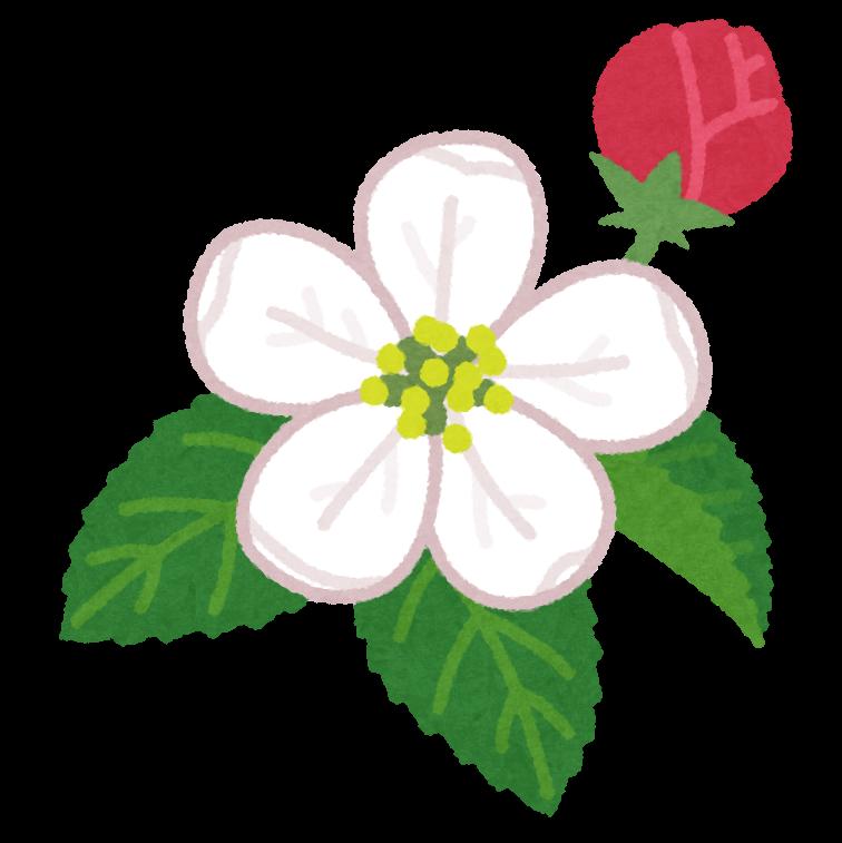 りんごの花のイラスト かわいいフリー素材集 いらすとや