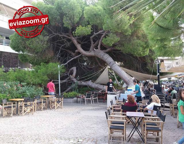 Χαλκίδα: Πανικός στον πεζόδρομο της Τζιαρντίνι - Τεράστιο πεύκο έπεσε πάνω σε τραπέζια παραλιακής καφετέριας! (ΦΩΤΟ)