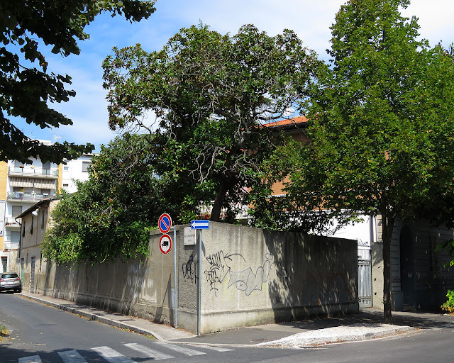 Corner garden, Viale Marconi, Livorno