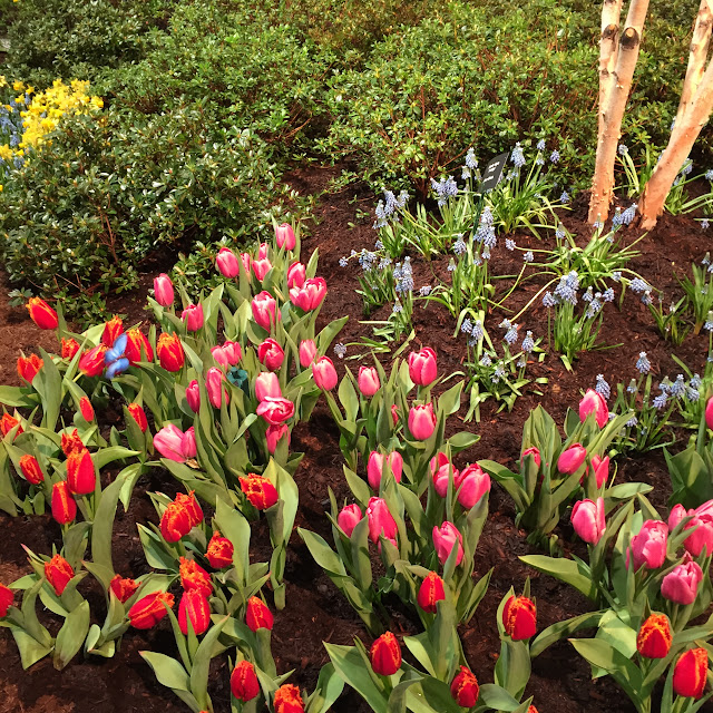 a gorgeous display of pink and red-orange tulip planting | Boston Flower & Garden Show 2017