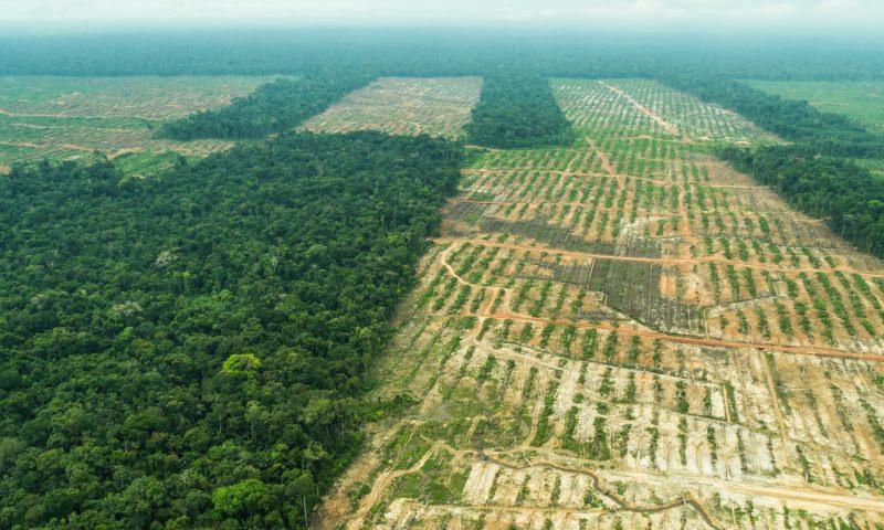 Desflorestação na Amazónia do Peru