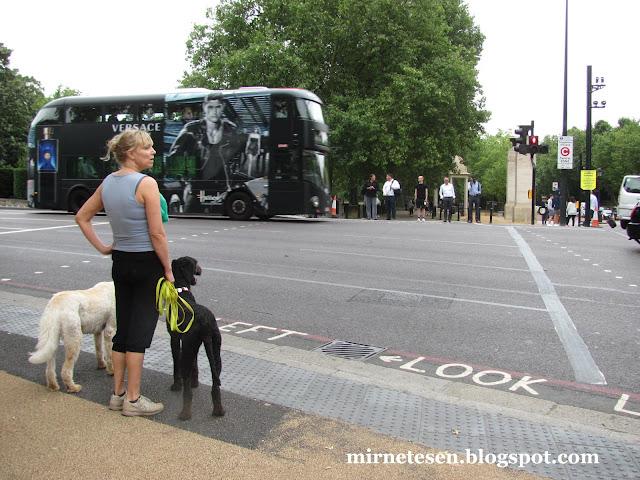 Лоднон - даблдекер и британка с двумя собаками