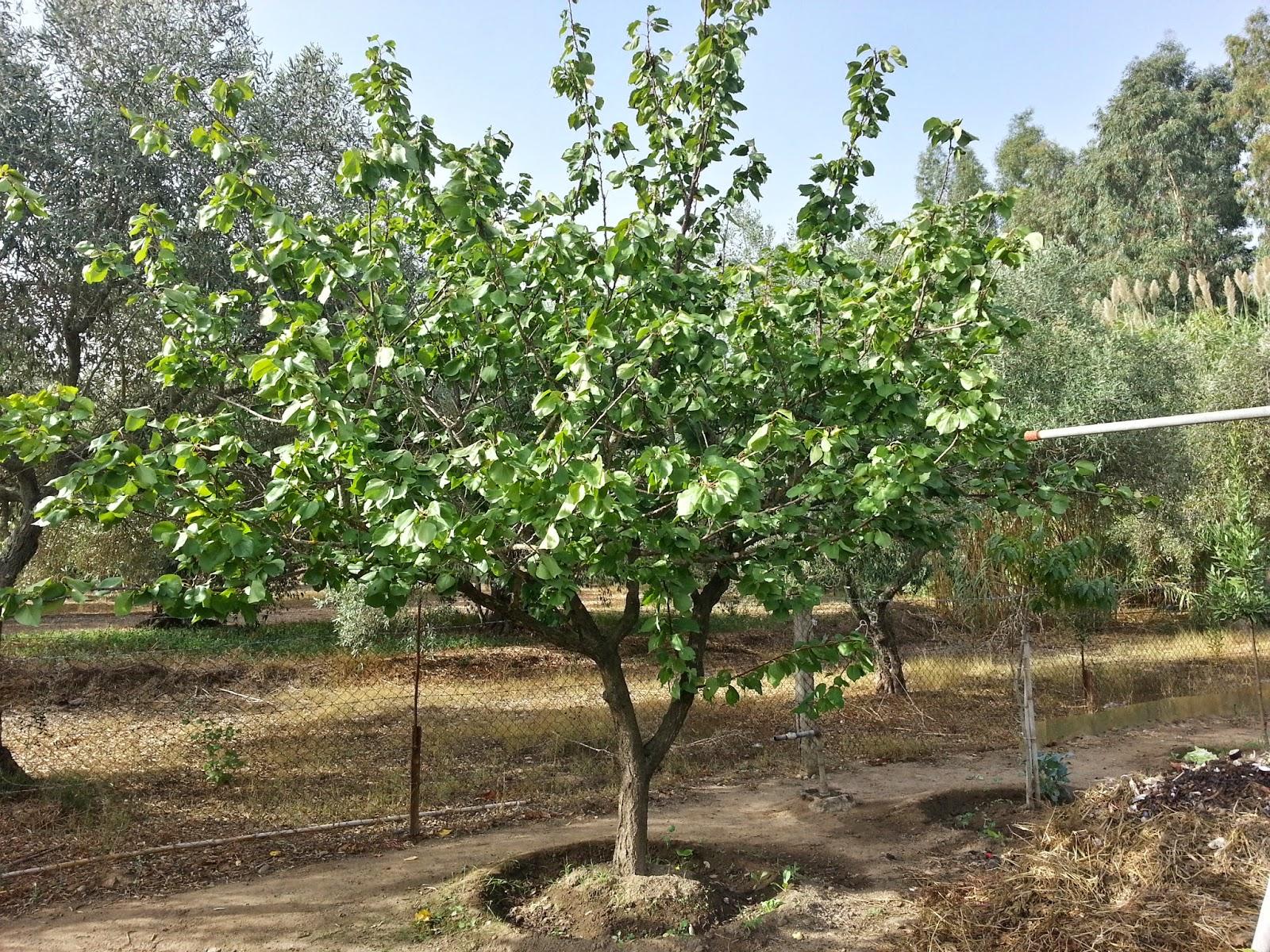 Il blog di sam piante da frutta for Piante nane da frutto