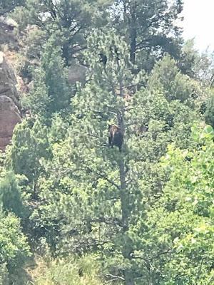 Bear at Garden of the Gods in Colorado Springs, CO